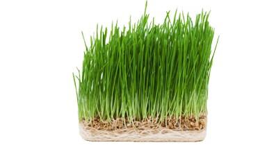 Средство для похудения GrassFit2
